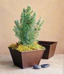 Indoor Container gardening containers